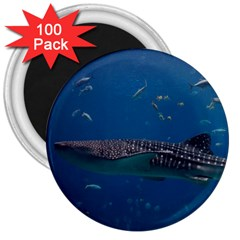 Whale Shark 1 3  Magnets (100 Pack)