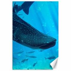 Whale Shark 2 Canvas 24  X 36
