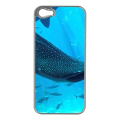 Whale Shark 2 Apple Iphone 5 Case (silver)