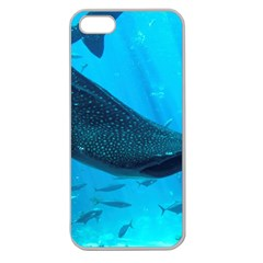 Whale Shark 2 Apple Seamless Iphone 5 Case (clear)