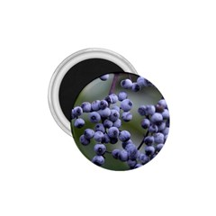 Blueberries 2 1 75  Magnets