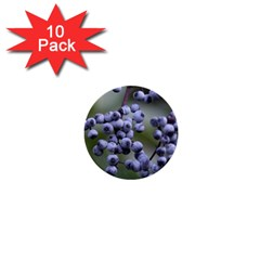 Blueberries 2 1  Mini Buttons (10 Pack)