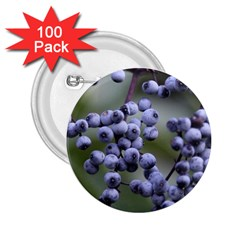 Blueberries 2 2 25  Buttons (100 Pack)