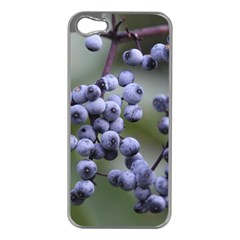 Blueberries 2 Apple Iphone 5 Case (silver)