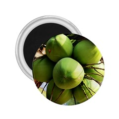 Coconuts 1 2 25  Magnets