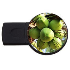 Coconuts 1 Usb Flash Drive Round (2 Gb)