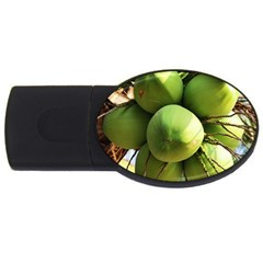 Coconuts 1 Usb Flash Drive Oval (2 Gb)