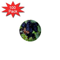 Grapes 3 1  Mini Buttons (100 Pack)
