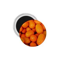 Kumquat 2 1 75  Magnets