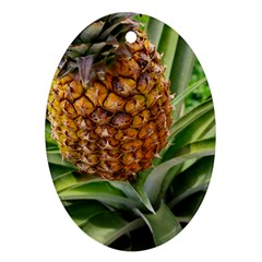 Pineapple 2 Ornament (oval)