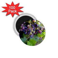 Grapes 2 1 75  Magnets (100 Pack)