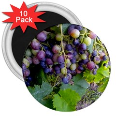 Grapes 2 3  Magnets (10 Pack)