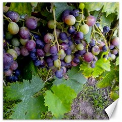 Grapes 2 Canvas 20  X 20