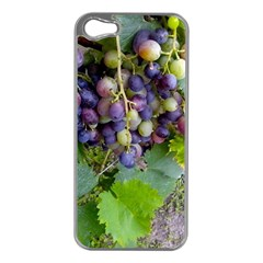 Grapes 2 Apple Iphone 5 Case (silver)