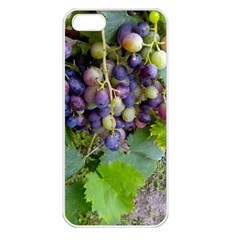 Grapes 2 Apple Iphone 5 Seamless Case (white)
