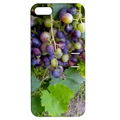Grapes 2 Apple Iphone 5 Hardshell Case With Stand
