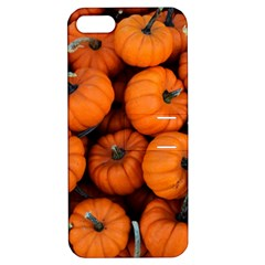 Pumpkins 2 Apple Iphone 5 Hardshell Case With Stand