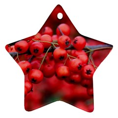 Red Berries 1 Ornament (star)