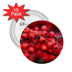 Red Berries 1 2 25  Buttons (10 Pack)