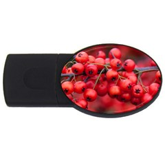Red Berries 1 Usb Flash Drive Oval (4 Gb)