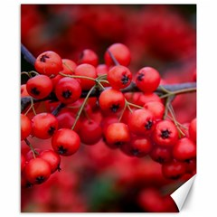 Red Berries 1 Canvas 8  X 10