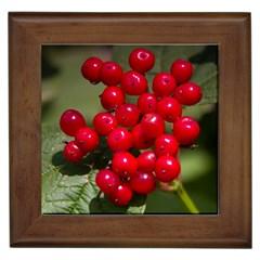 Red Berries 2 Framed Tiles