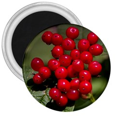 Red Berries 2 3  Magnets
