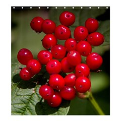 Red Berries 2 Shower Curtain 66  X 72  (large)