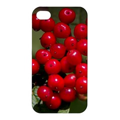Red Berries 2 Apple Iphone 4/4s Premium Hardshell Case