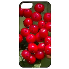 Red Berries 2 Apple Iphone 5 Classic Hardshell Case