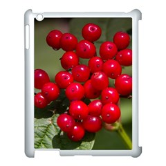 Red Berries 2 Apple Ipad 3/4 Case (white)