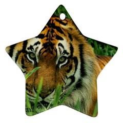 Tiger Ornament (Star)