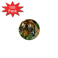 Tiger 1  Mini Button (100 Pack)