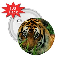 Tiger 2 25  Button (100 Pack)