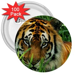 Tiger 3  Button (100 pack)
