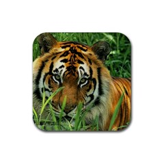 Tiger Rubber Square Coaster (4 pack)