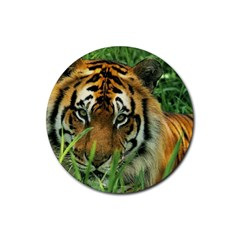 Tiger Rubber Round Coaster (4 pack)
