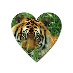 Tiger Magnet (heart)