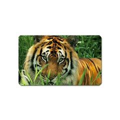 Tiger Magnet (Name Card)
