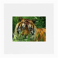 Tiger Glasses Cloth (Medium)