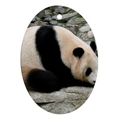 Giant Panda Ornament (Oval)