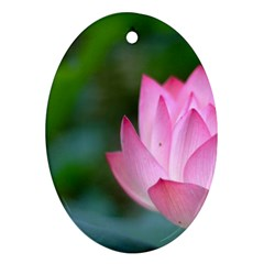 Pink Flower Ornament (oval)