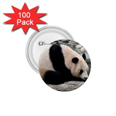 Giant Panda 1 75  Button (100 Pack)