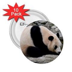 Giant Panda 2.25  Button (10 pack)