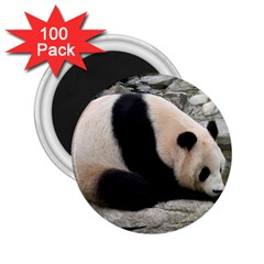 Giant Panda 2 25  Magnet (100 Pack)