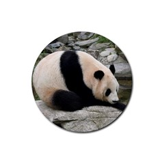 Giant Panda Rubber Round Coaster (4 Pack)