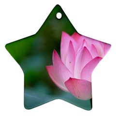 Red Pink Flower Ornament (Star)