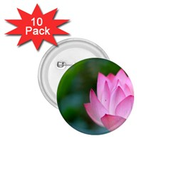 Red Pink Flower 1 75  Button (10 Pack)