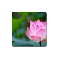 Red Pink Flower Magnet (square)