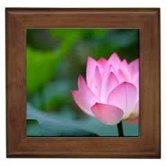 Pink Flowers Framed Tile